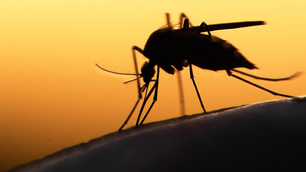 How to Protect Your Family from the Zika Virus